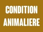 animal-001